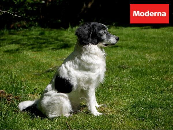 Moderna hundförsäkring