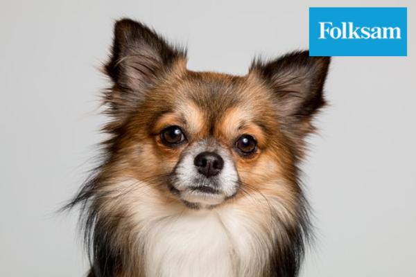 folksam hundförsäkring