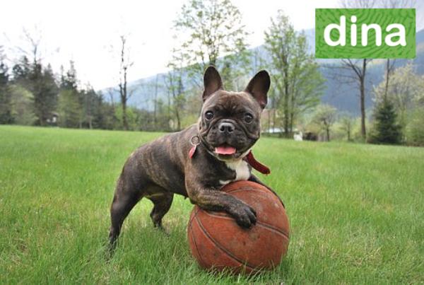 dina hundförsäkring