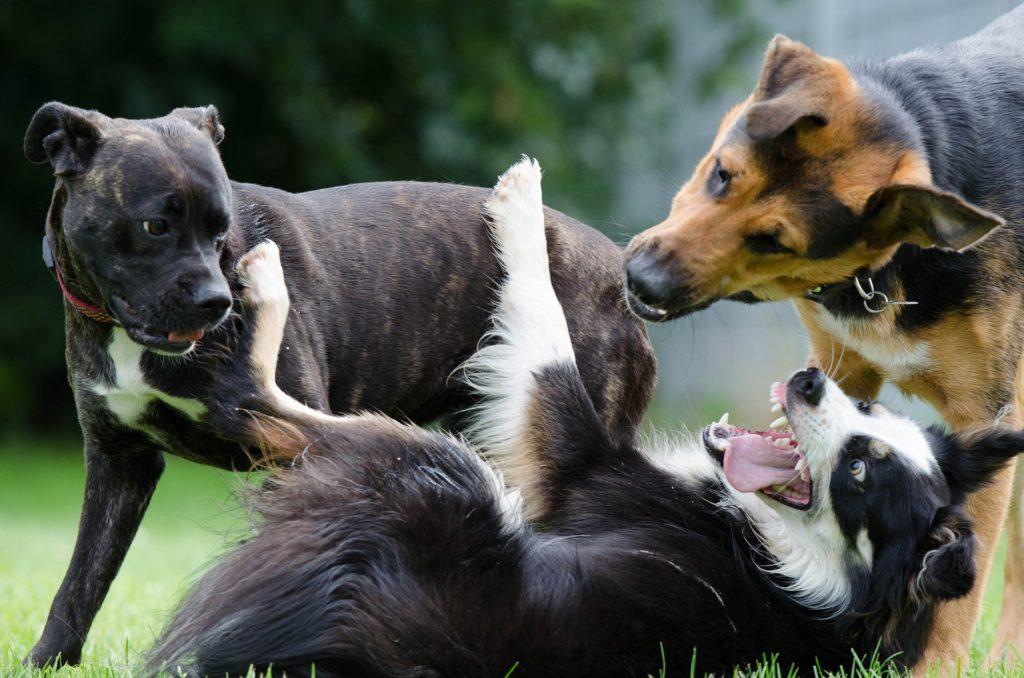 Hundförsäkringsbolag