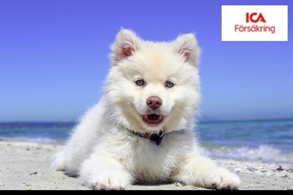 ICA hundförsäkring