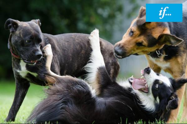 if hundförsäkring