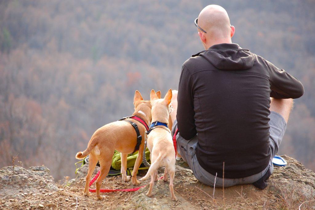 Resa-med-hundar