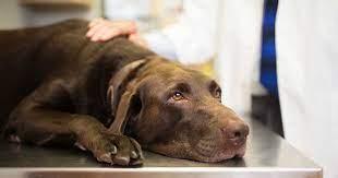 Billigaste hundförsäkringen 2021